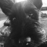 chablis | the wine dog