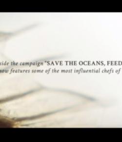 Save the Oceans: Feed the Word. Ecco il documentario di 20 grandi chef mondiali contro il sovra sfruttamento dei mari