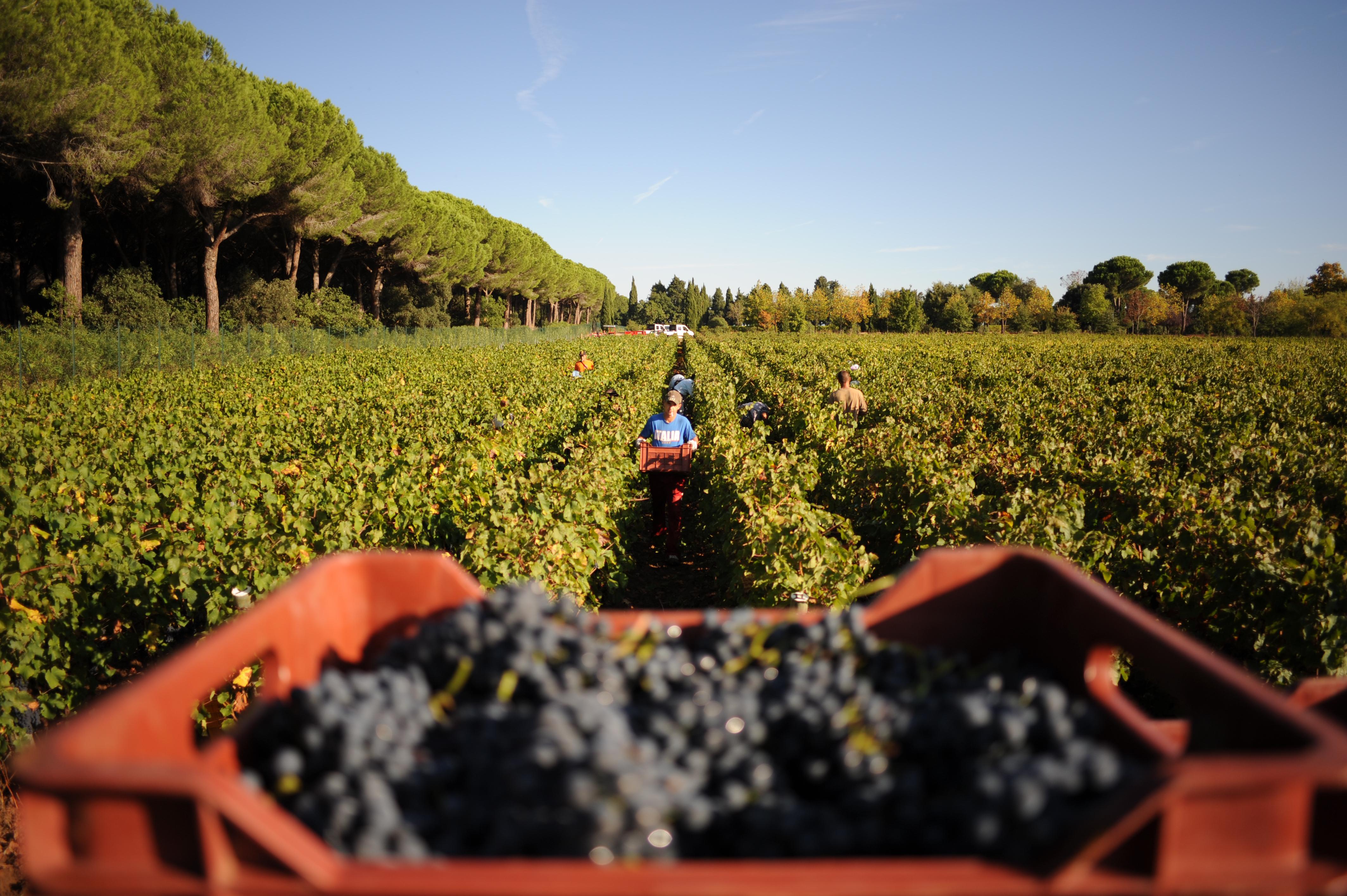 Sulla strada delle wine-star