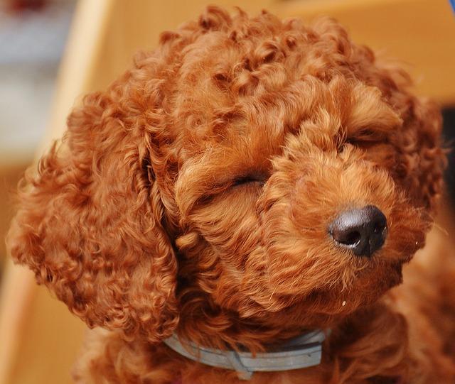 dog-1331485_640